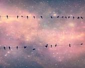 "Starry Sky Photo. ""Night Song"". 8.5x11inch Photo. Birds. Birds on Wire. Stars. night. sky. Dreamy. pink. purple. stardust. whimsical. girly"