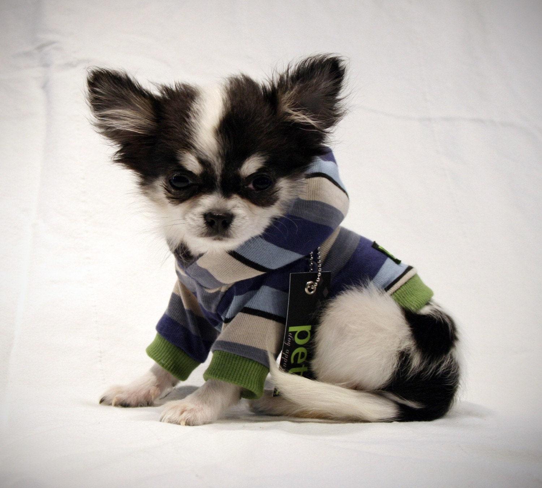 spring chihuahua boy blue stripe dog shirt by petitdogapparel