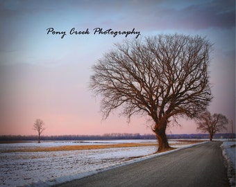 Lovely Single Tree at Dusk Color 8x10 Fine Art Print