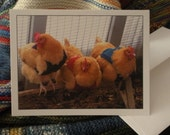 Chickens in Sweaters Notecard