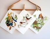 Audubon Bird Prints, Fall Home Decor, Lot of Three (3)