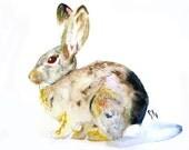 Creature No. 4 Cottontailed Rabbit Original Painting