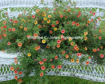 White Wicker Bench With Flowers Fine Art VT Photo Print: Multiple Sizes Available