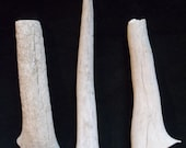 Small (Set of 3) Deer Antler Dog Chews (Lot 121)