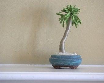 PRICE REDUCED - Everlasting beach palm bonsai