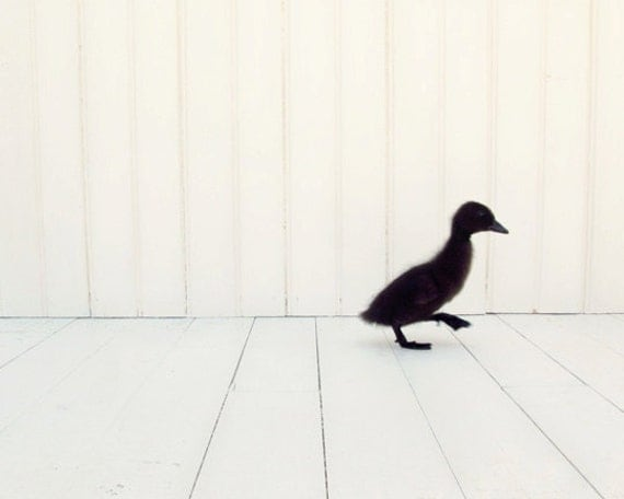 Minimalist Photography, duckling photo, nursery decor, little black duck, black & white art, minimalism, child's room wall art, 8x10 Print