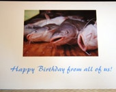 "Catfish photo birthday card, 5""x7"""