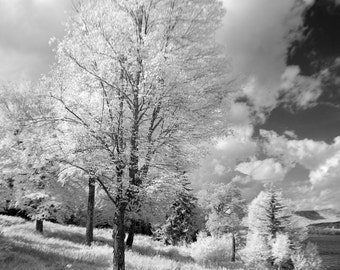 "Black and white photocard, 5""x7"",  of trees and landscape in rural New Hampshire."