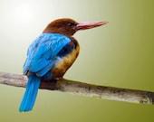 Abandoned Kingfisher