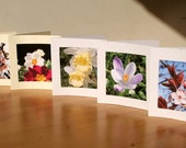Easter Cards 1 // Pack of 5 Photo Cards // Suitable for any occasion - perfect for Easter