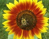 Bee & Butterfly Sunflower Seed Garden Mix