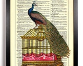 Peacock on Birdcage, Home, Kitchen, Nursery, Bath, Office Decor, Wedding Gift, Eco Friendly Book Art, Vintage Dictionary Print 8 x 10 in.