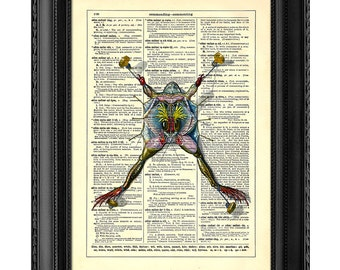 anatomy of a frog home kitchen nursery bathroom office decor wedding gift eco friendly book art vintage dictionary print 8 x 10 in anatomy home office