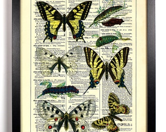 Vintage European Butterfly Diagram, Home, Nursery, Office Decor, Wedding Gift, Eco Friendly Book Art, Vintage Dictionary Print, 8 x 10 in.