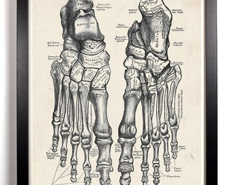 Human Feet Anatomy, Home, Kitchen, Nursery, Bath, Dorm, Office Decor, Wedding Gift, Housewarming Gift, Unique Holiday Gift, Wall Poster