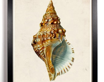 The Single Sea Shell, Home, Kitchen, Nursery, Bath, Dorm, Office Decor, Wedding Gift, Housewarming Gift, Unique Holiday Gift, Wall Poster