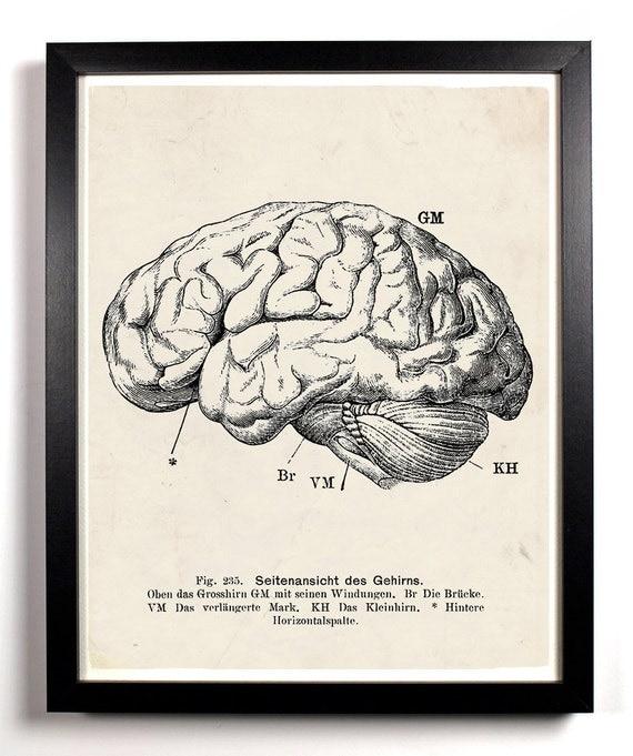 Human Brain Anatomy, Home, Kitchen, Nursery, Bath, Dorm, Office Decor, Wedding Gift, Housewarming Gift, Unique Holiday Gift, Wall Poster