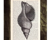 Vintage Book Print Dictionary or Encyclopedia Page Print- Book print Perfect Sea Shell Print on Vintage Dictionary Bookart art BPSL035