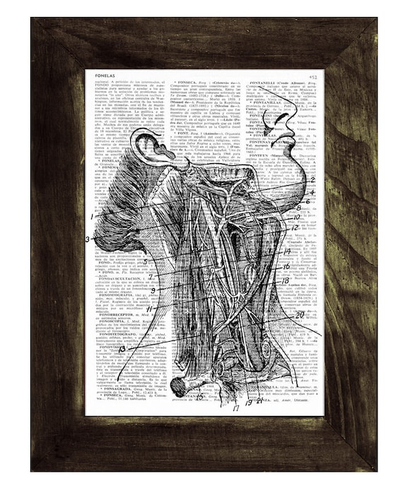 Neck Arteries  anatomy Art Print. Gift for medical students- Upcycled Book Print, Doctors gift BPSK023