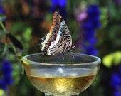Sauternes Fine Art Macro Photography Print butterfly  drunk on wine