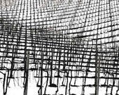 Fine Art Photography Print Black and White tangle of vines