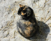 Cat Photography, Tortoise Shell Cat, Cat on Beach, Cute Cat Photo, Feral Cat Print, Calico Cat, Sandy Beach Print, Sand Kitty, Sand, Taupe