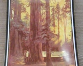 Retreat in the Redwoods Souvenir Tray