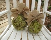 Moss ball with burlap ribbon