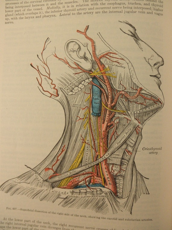 vintage book-1977 Gray's Anatomy - medical, illustrations