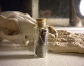Possum Ear Taxidermy Religious Educational Magic Opossum Pest Real Vial Glass Jar Science Magic Spell