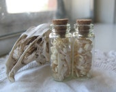 Cruelty Free - Specimen Collection - Rodent Bones - Rat - Mice - Mouse - Rats - Lot 9