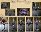 Texas Wild Flower Collection