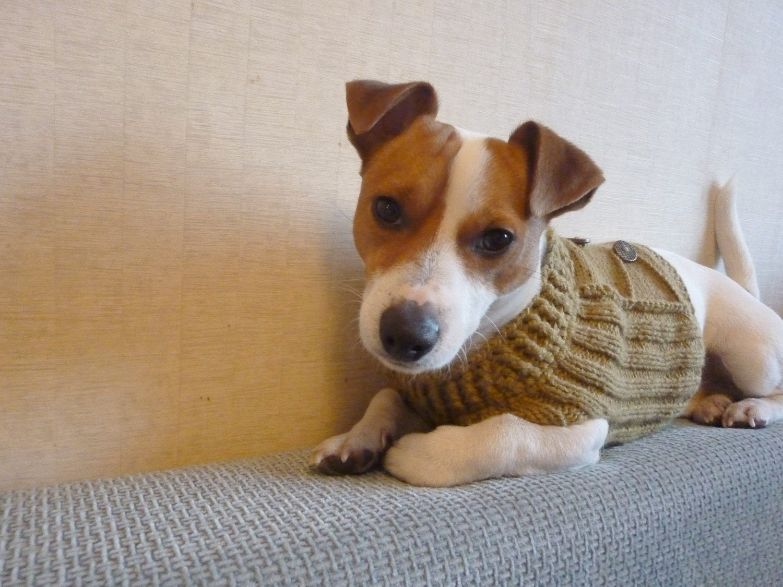 knitting with dog hair pdf