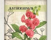 Antirrhinum Vintage Etsy Shop Banner Set