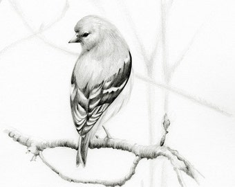Bird Drawing Pencil Drawing Giclee Fine Art Print of my Original Artwork Woodland Bird Pencil Drawing Bird Decor