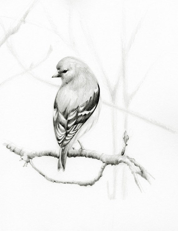 Bird Drawing Pencil Drawing Giclee Fine Art Print Of My