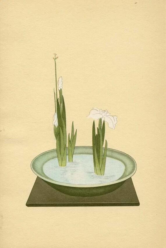 BOTANICAL BOOK PAGE 1934 Japanese Bulrush and Iris Plate No. 11