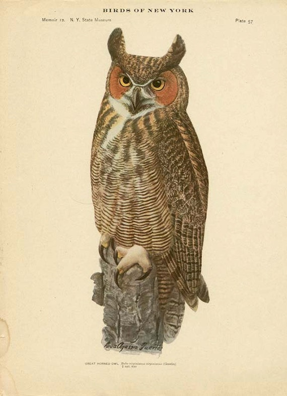 BIRDS of NEW YORK Antique Art Print Plate 57 Great Horned Owl
