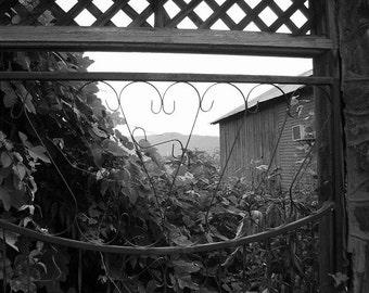 Black & White Photograph - Kudzu Gate - 5x7 matted photograph