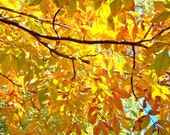 Underneath a Hickory Tree--Penmoken Park, Lexington, Kentucky--8 x 10 fine art photo, signed