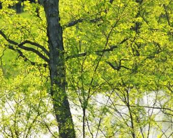 Spring Green, Owen County, Kentucky, April 2011--5 x 7 fine art photo, signed
