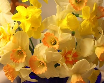 A Gathering of Daffodils, Lexington, KY, 5 x 7 fine art photo, signed