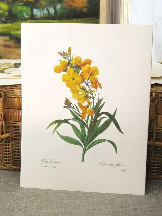 Vintage Botanical Print 10 x 13  No 47 - Paper Ephemera