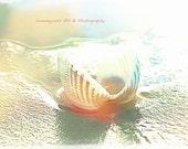 Seashells, Shells, Seashore, Scalloped Shell, Photography Prints, 5x7 + More Sizes, Ocean, Sandy, Beach Decor, Cottage Wall Art