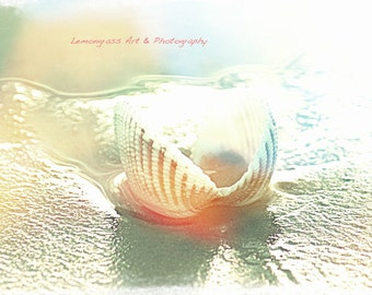 Colorful Seashell, Beach Photography, Fine Art Print, Shells, Seashore, Scalloped Shell, Ocean Decor, Sandy Beaches, Cottage Wall Art