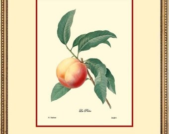 PEACH - Botanical print reproduction 1014