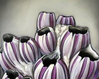 Bevy Of Barnacles Original Oil by Carin Vaughn 16x20