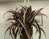 Macrame Plant Hanger Light Green