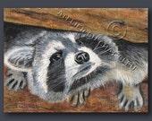 ACEO Original Raccoon