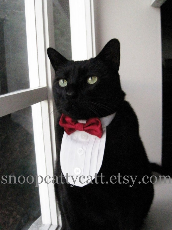 Cat Tuxedo - A Red Tie Affair